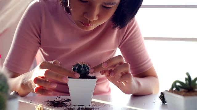 frau pflanzer füttert ihr kaktus - nadel pflanzenbestandteile stock-videos und b-roll-filmmaterial