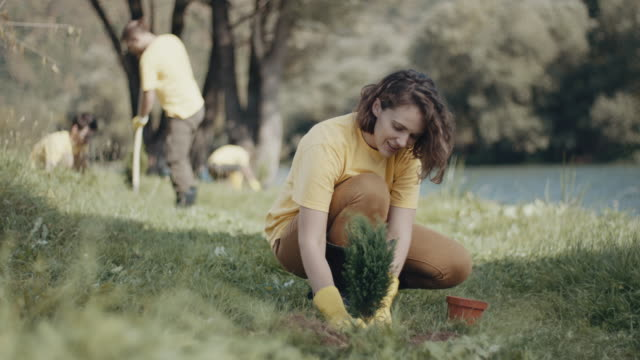 vídeos de stock e filmes b-roll de woman planting a tree - environmental conservation