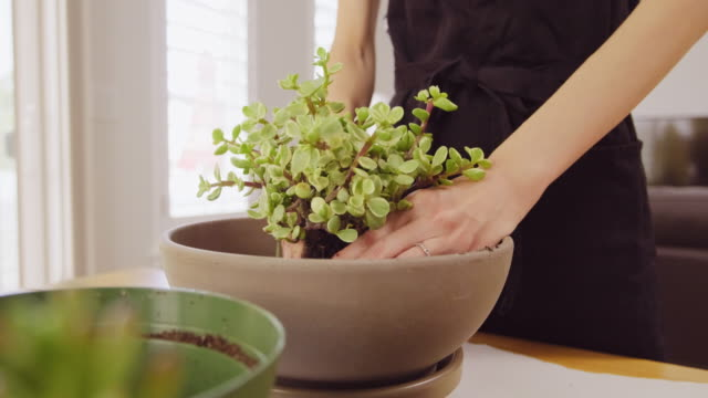 woman planting an indoor succulent garden - gardening equipment stock videos & royalty-free footage