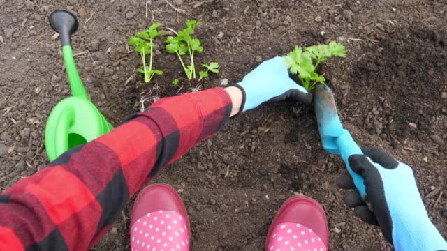 woman planting celery - celery stock videos & royalty-free footage