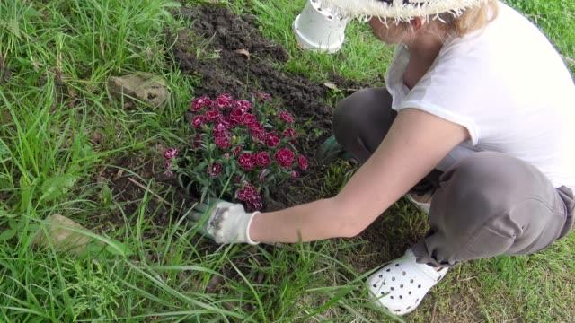 vidéos et rushes de femme, planter des fleurs dans le jardin - pelouse