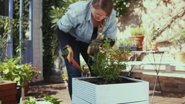 woman planting flowers. - hobbies stock videos & royalty-free footage