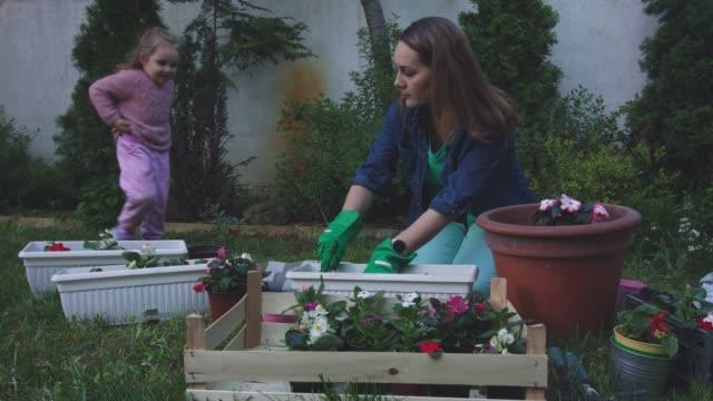vídeos de stock e filmes b-roll de woman planting flowers when her toddler comes to help her - colocar planta em vaso