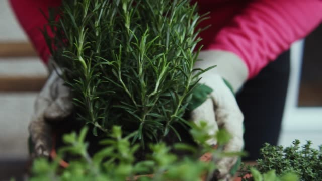 woman planting herbage at home. - sowing stock videos & royalty-free footage