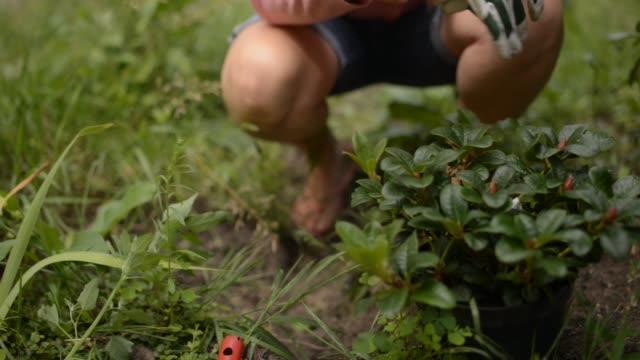 woman planting in garden - trädgårdshandske bildbanksvideor och videomaterial från bakom kulisserna