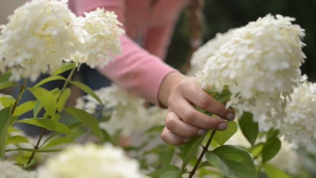 vídeos de stock e filmes b-roll de woman planting in garden - só mulheres de idade mediana