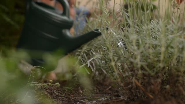 stockvideo's en b-roll-footage met woman planting in garden - gieter