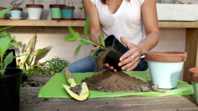 Woman Plants Herbs into Pot