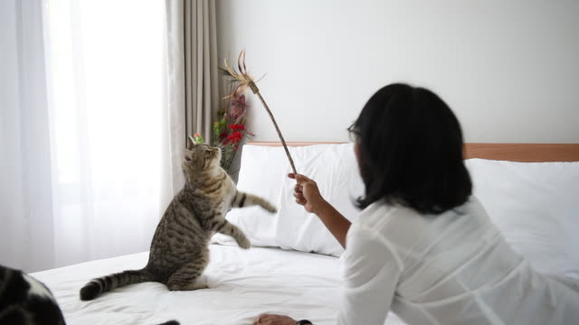 woman playing a feather toy with two cats in modern white bedroom - pet owner stock videos & royalty-free footage