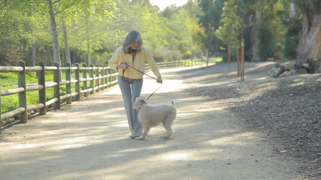 ws pan td woman playing tug of war with her dog / los angeles, california, usa - 鎖点の映像素材/bロール