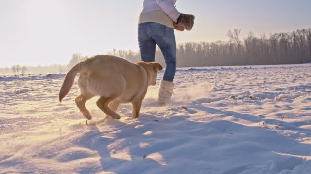 ws woman playing with a puppy in snow - young animal stock videos & royalty-free footage