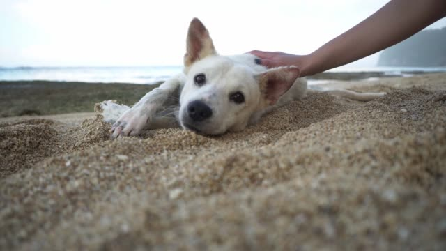 woman playing with dog on the beach on bali - stray animal stock videos & royalty-free footage