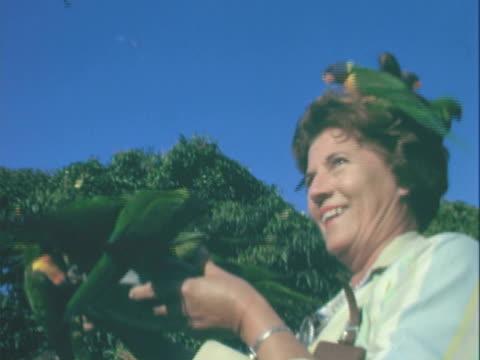 vidéos et rushes de la woman playing with group of colorful rainbow lorikeet birds / australia - groupe moyen d'animaux