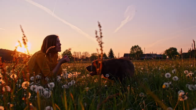 slo mo woman playing with her dog in the grass at sunset - dente di leone video stock e b–roll