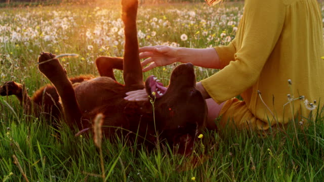 slo mo woman playing with her dog in the grass - dog stock videos & royalty-free footage