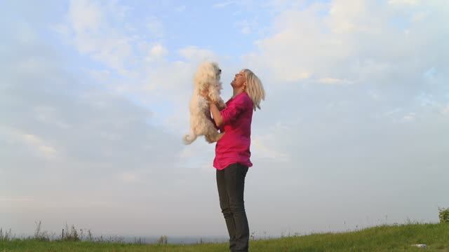 hd slow motion: woman playing with her dog - bichon frise stock videos and b-roll footage