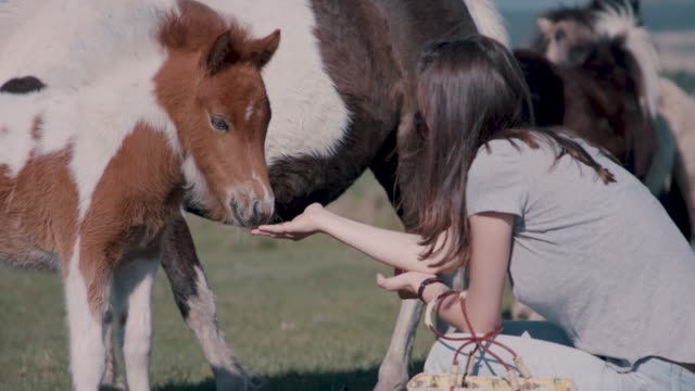 vidéos et rushes de woman playing with pony and foal - cornouailles