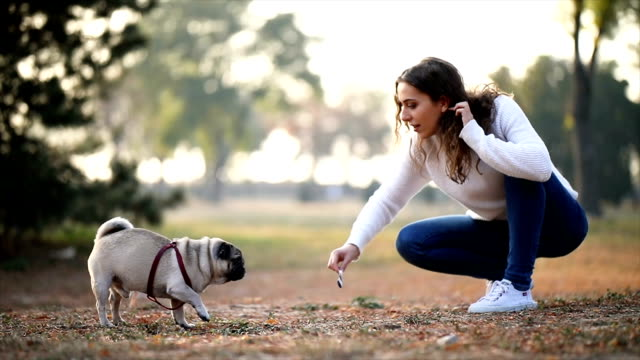 woman playing with pug in a park - crouching stock videos & royalty-free footage
