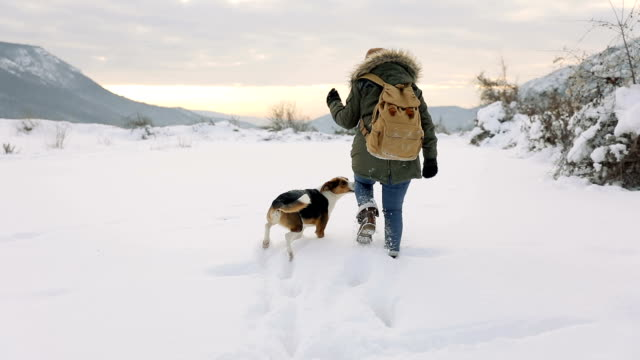 woman playing with the dog in fresh snow - warm clothing stock videos and b-roll footage