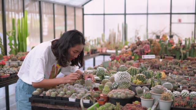 女性は絵筆の助けを借りて、サボテンの植物を受粉 - 園芸学点の映像素材/bロール