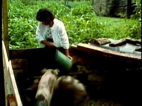 vídeos de stock, filmes e b-roll de 1969 ms zo woman pouring food into trough for pigs in pen/ usa/ audio - appalachia