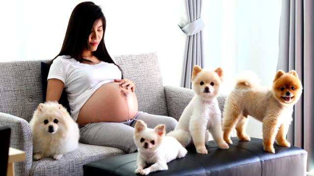 vídeos de stock, filmes e b-roll de mulher grávida 9 mês e família de cães bonitos - animal abdomen