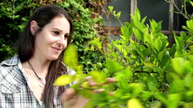 woman pruning lemon tree - pruning stock videos & royalty-free footage