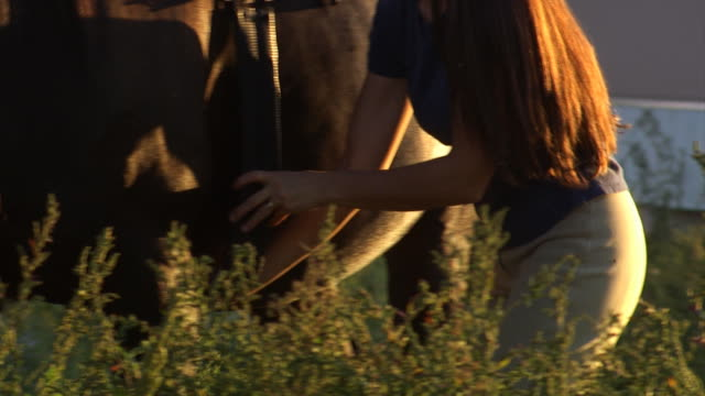 stockvideo's en b-roll-footage met woman putting a saddle on a horse - one mid adult woman only