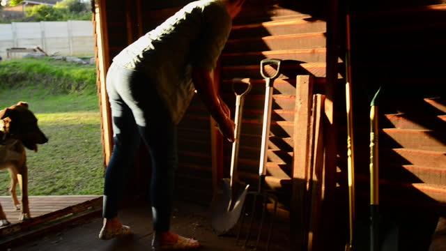 donna che rimette gli attrezzi da giardinaggio nel suo capannone nel pomeriggio - bricolage video stock e b–roll