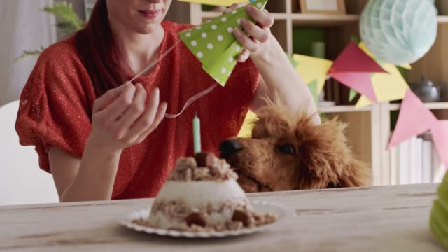woman putting on a party hat on her dog so they can celebrate his first birthday - party hat stock videos & royalty-free footage