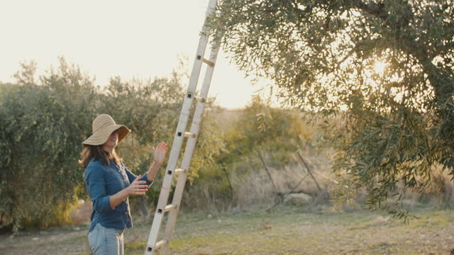 woman putting up ladder on olive tree - ladder stock videos & royalty-free footage
