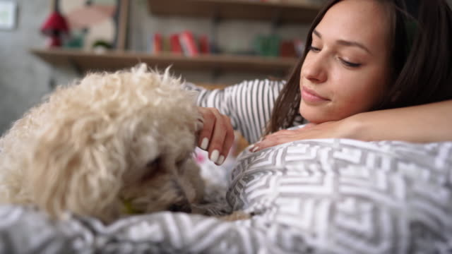 woman relaxing at home with pet poodle dog - reclining stock videos & royalty-free footage