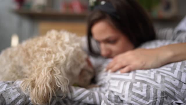 ペットプードルドッグと自宅でリラックスする女性 - ペットの飼い主点の映像素材/bロール
