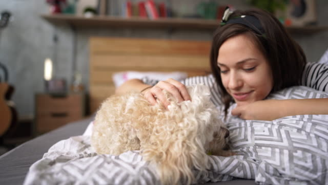 woman relaxing at home with pet poodle dog - pet bed stock videos and b-roll footage