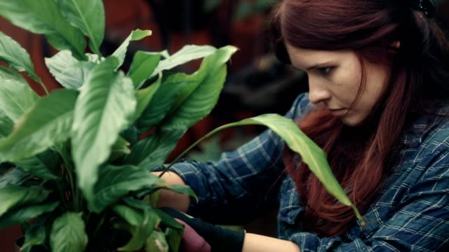 woman replanting flowers in the garden - flower pot stock videos and b-roll footage