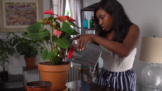 stockvideo's en b-roll-footage met woman repotting houseplant - kamerplant