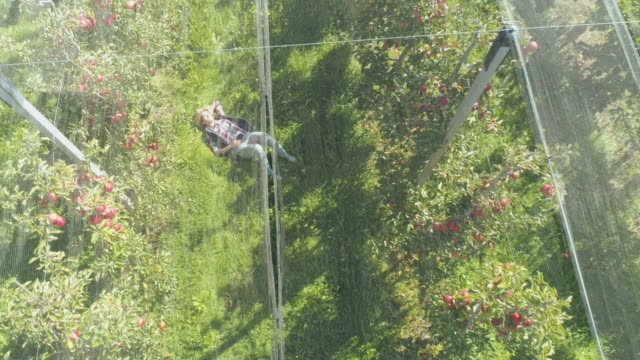 vídeos de stock, filmes e b-roll de aerial mulher descansando no pomar - orgânico
