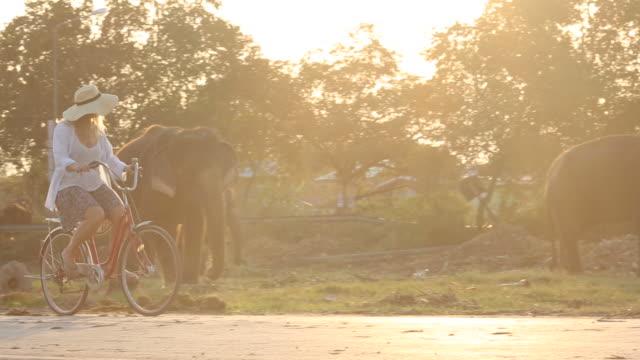 vídeos de stock e filmes b-roll de woman rides bicycle below grazing elephants - cinco animais
