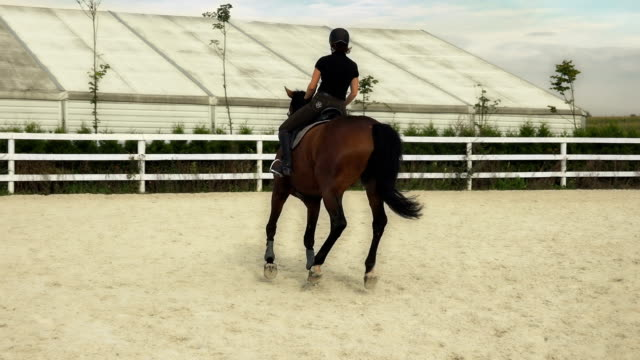 woman riding a horse in jumper ring - female animal stock videos & royalty-free footage