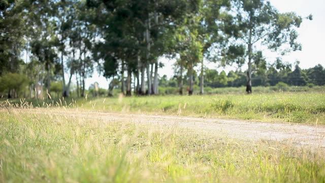 Woman riding bicycle along rural bicycle path