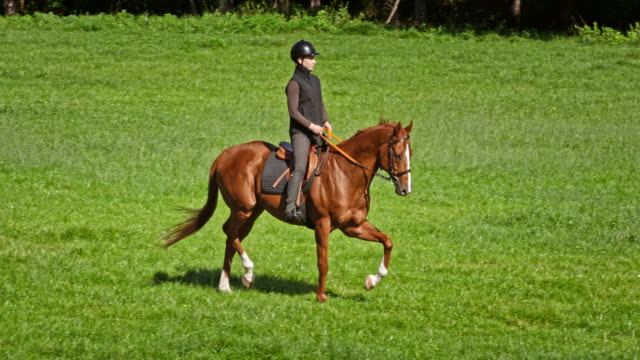 slo mo ds woman riding brown horse across a meadow - hooved animal stock videos and b-roll footage