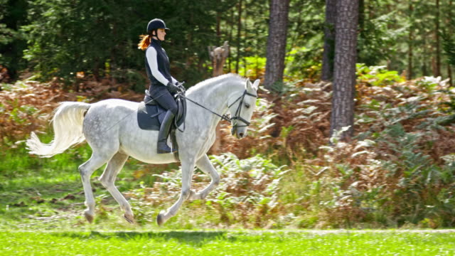 slo mo ts woman riding galloping white horse in nature - gallop animal gait stock videos & royalty-free footage
