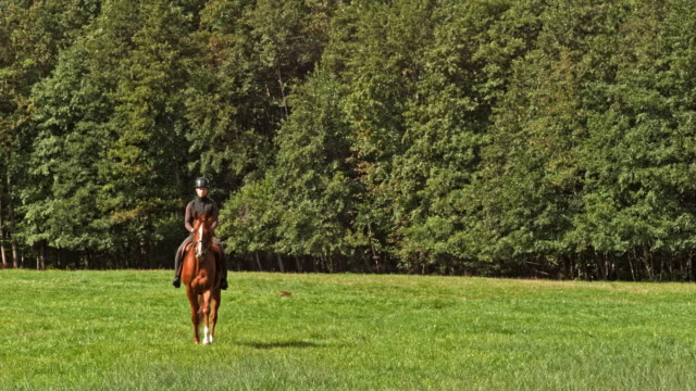 Woman riding her brown horse across a sunny meadow