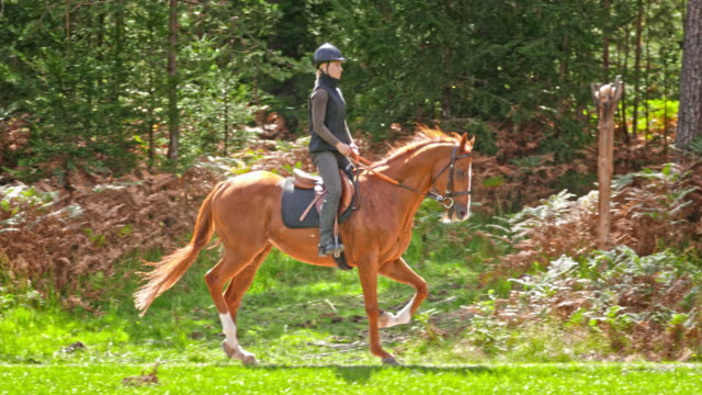 SLO MO TS Woman riding her trotting brown horse