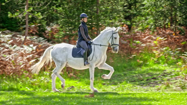 slo mo ts woman riding her trotting white horse - all horse riding stock videos and b-roll footage