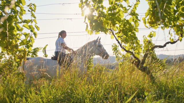 slo mo woman riding horse through a vineyard - recreational horseback riding stock videos & royalty-free footage