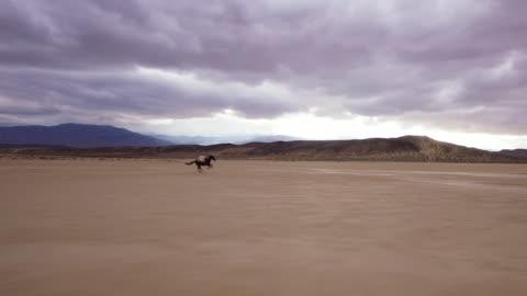 vidéos et rushes de (bourdonnement) femme équitation dans le désert 4 - cheval