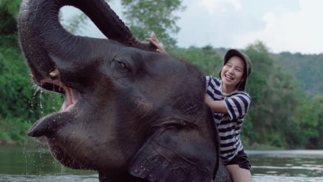 vídeos de stock e filmes b-roll de woman riding on an elephant in river in thailand - exotismo
