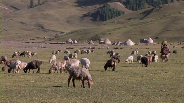 vídeos y material grabado en eventos de stock de woman riding on horse and sheep - oficio agrícola