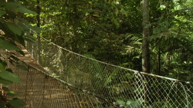 stockvideo's en b-roll-footage met ms, woman running on canopy walk in jungle, manaus, brazil - haarband